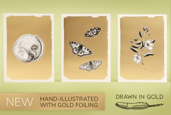 New range of Drawn in Gold greeting cards